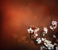 Cherry flowers background Royalty Free Stock Photography