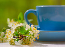 Cherry flowers and blue cup Stock Photo