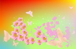 Cherry flowers and butterflies Royalty Free Stock Image