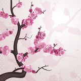 Cherry flowers. Card with spring blossom. Royalty Free Stock Photo
