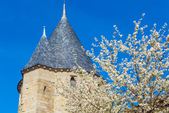 Cherry Flowers and Castle, Carcassonne Stock Photography
