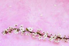 Cherry flowers on cement stock photos