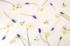 Cherry flowers, daffodils, murine hyacinths on white background. Stock Photo