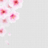 Cherry Flowers Isolated Fotografie Stock