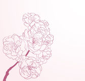 Cherry flowers in line-art style Royalty Free Stock Image