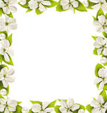 Cherry flowers with pearl beads like frame on white Royalty Free Stock Photos