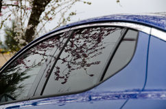 Cherry flowers reflect a car's window Royalty Free Stock Image