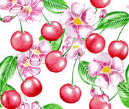 Cherry and Flowers Royalty Free Stock Photography