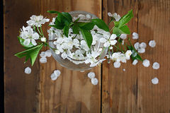 Cherry flowers and twigs on a wood Stock Image