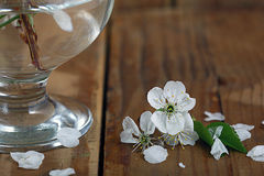 Cherry flowers and twigs on a wood Royalty Free Stock Photography