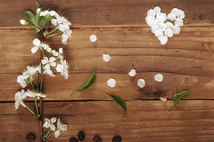 Cherry flowers and twigs on a wooden Royalty Free Stock Photos