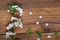 Cherry flowers and twigs on a wooden Stock Photo
