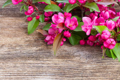 Cherry flowers on wood Stock Photo