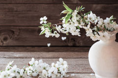 Cherry flowers on  wooden background Stock Images
