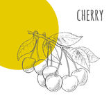 Cherry freehand pencil drawn sketch vector illustration