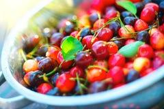 Cherry. Fresh ripe cherries closeup. Organic berries background. Gardening stock photos