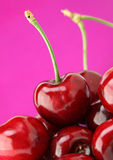Cherry fruit Royalty Free Stock Photos
