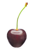 Cherry fruit. One cherry fruit close up isolated on white background stock images