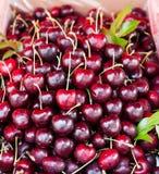 Cherry fruit Stock Image