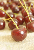 Cherry. The fruit of cherry wood Royalty Free Stock Photography