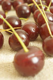 Cherry. The fruit of cherry wood Royalty Free Stock Image