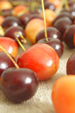 Cherry. The fruit of cherry wood Stock Images