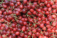Cherry fruits. A lot of sour cherrys Royalty Free Stock Image