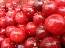 Cherry fruits. Table abundance whit cherry stock images