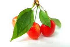 Cherry fruits with green leaves Stock Photo