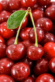 Cherry fruits with leaf on the heap of cherry. Two cherry fruits with leaf is lie on the heap of fruits Royalty Free Stock Photos
