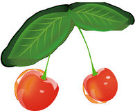 Cherry, Fruits, Red, Berries Stock Photography