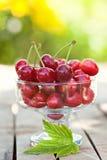 Cherry fuits outdoor Stock Images