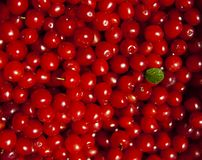Cherry full background Stock Images