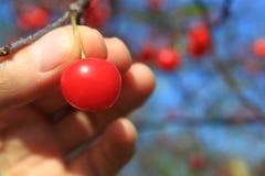 Cherry äga din hacka Royaltyfria Foton