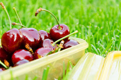 Cherry on the grass closeup background Royalty Free Stock Photos