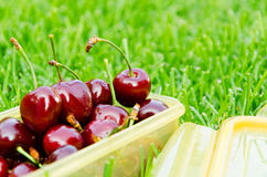 Cherry on the grass closeup background Stock Images
