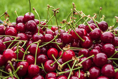 Cherry on the grass Royalty Free Stock Photos