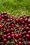 Cherry on the grass Royalty Free Stock Photo