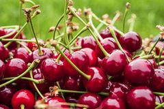 Cherry on the grass Stock Images