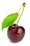 Cherry and green leaf Royalty Free Stock Photo