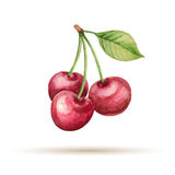 Cherry stock illustration