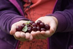 Cherry in hand royalty free stock photos