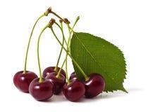 Cherry Royalty Free Stock Image