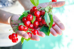 Cherry in hands Royalty Free Stock Images