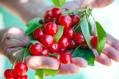 Cherry in hands Royalty Free Stock Photography