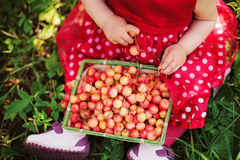Cherry and hands. Stock Images