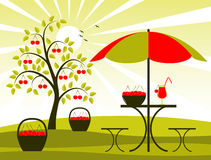 Cherry harvest. Cherry tree, baskets of cherries and table with umbrella Stock Photos