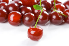 Cherry harvest Royalty Free Stock Photos
