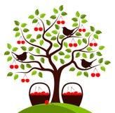 Cherry harvest Stock Photos