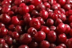 Cherry heap Royalty Free Stock Photography